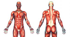 effects of bad posture on muscles