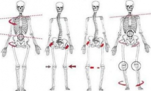 effects of bad posture on the muscular and skeletal systems